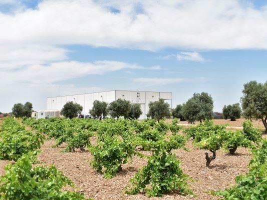 wine tour madrid